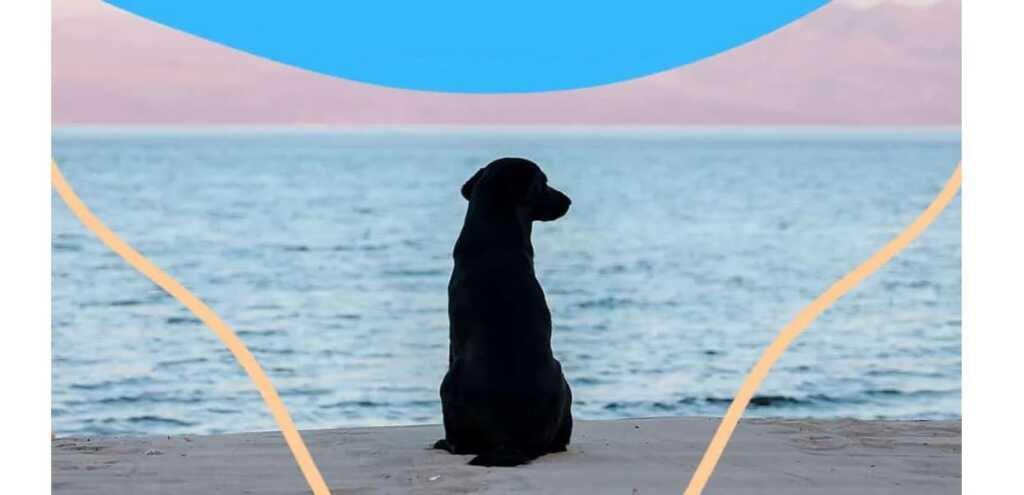 Ode al cane, la poesia di Neruda che celebra il rapporto cane e uomo