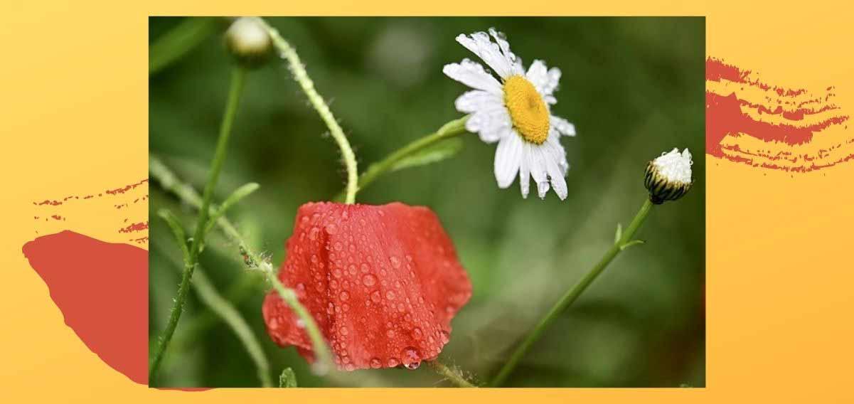 pioggia-di-settembre-poesia-sciascia-1201-568