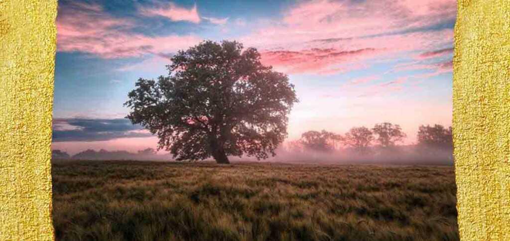 """""""Alla natura"""", la poesia di Coleridge che celebra l'ambiente"""