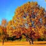 ottobre-poesia-cardarelli-autunno-1201-568